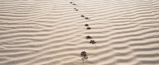 Is your accounting software 'audit trail' ready? It should!